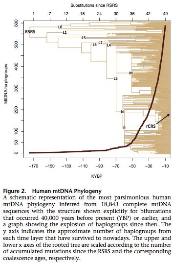 of the molecular clock in Molecular Clock Human