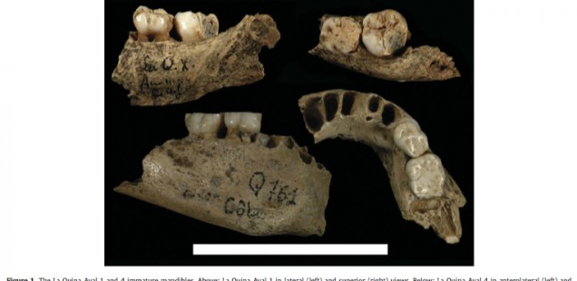 Early Aurignacian Dentition and Why Paleontology Is a Moving Target