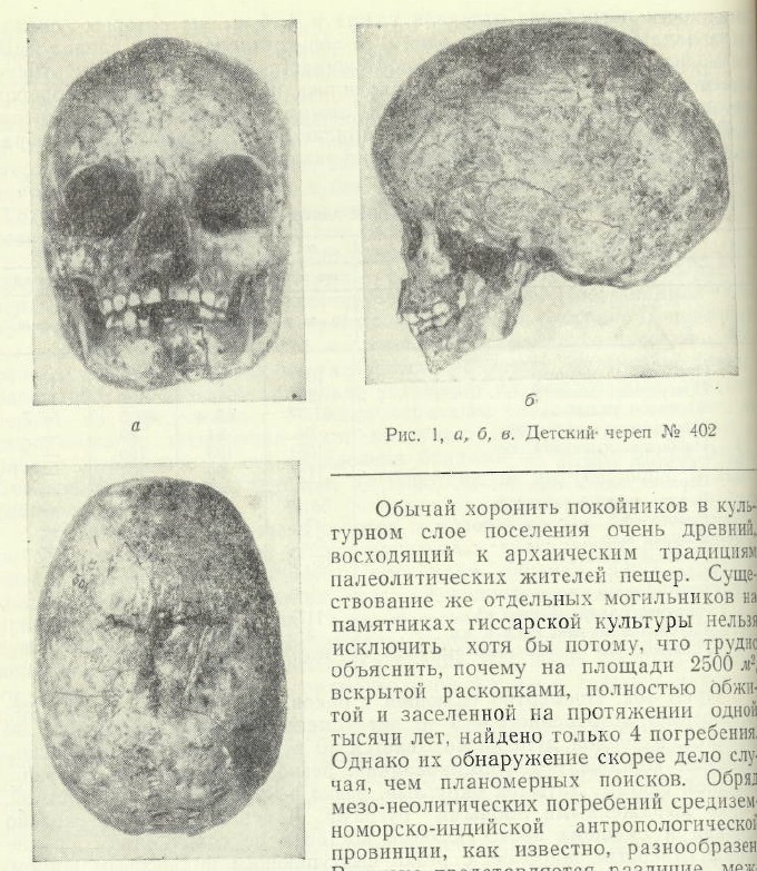 TutkaulSkull