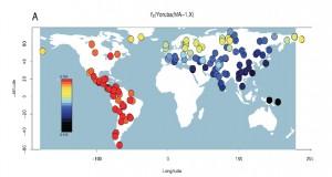 Anthropogenesis-MaltaSharedDrift