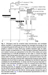 Anthropogenesis-NeandertalsHumansTeeth