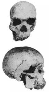Hofmeyr-Skull
