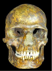 Kostenki-Skull
