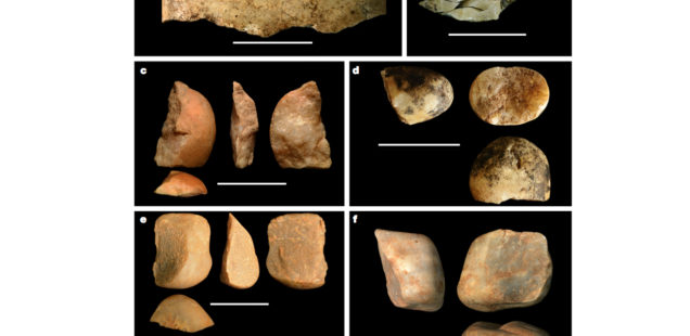 New World Monkeys Produce Hominin-Grade Lithic Tools